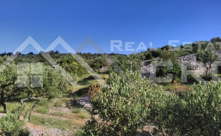 Farmland in Skrip, Brac island, for sale