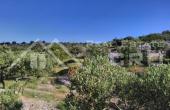 Farmland in Skrip, Brac island, for sale (1)