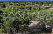 Farmland in Skrip, Brac island, for sale (2)