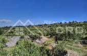 Farmland in Skrip, Brac island, for sale (3)