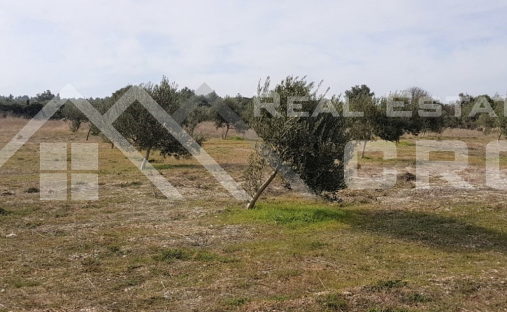 Farmland with a superb sea view for sale, Supetar (3)