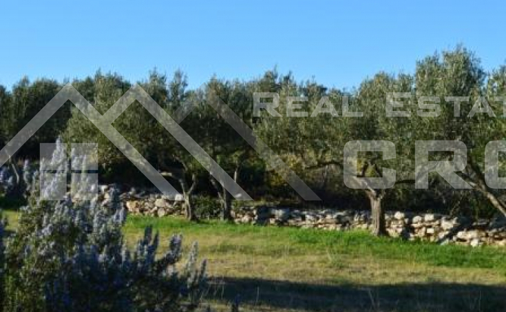 Farmland with outstanding seaview, for sale, Supetar, Brac island (1)
