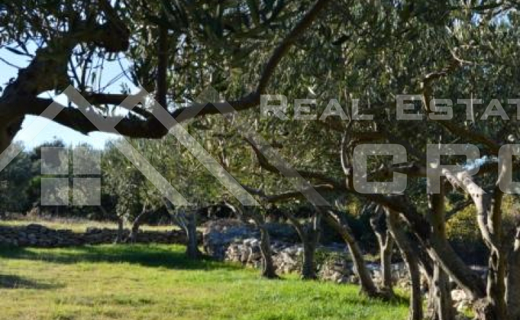 Farmland with outstanding seaview, for sale, Supetar, Brac island (2)