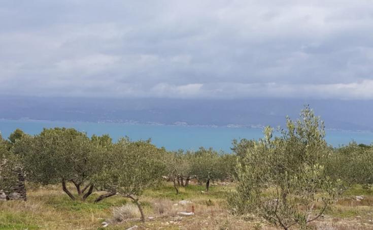 Immobilien Brac - Landwirtschaftliches Grundstück in exzellenter Lage mit Meerblick, zum Verkauf