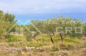 Farmland with wonderful sea view, for sale (3)