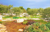 Farmland with a living unit and beautiful sea view, for sale (3)